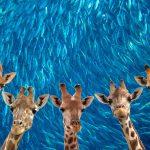 quadro giraffe e sardine